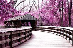 covered bridge surrounded by purple trees in Wildwood Metro Park in Toledo, Ohio