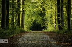 Forest path covered with the first signs of the fall, Hallerbos (Halle Forest), Belgium.