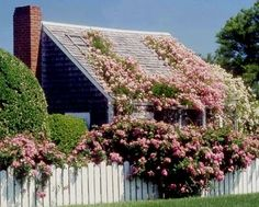Rose-covered house in Nantucket.  Definitely on its way to becoming a Rose House. They have lattice on the top to train the roses, the same way Blake did in the novel.