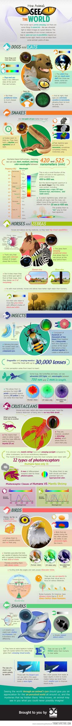 (infographic, humor, perspectives)   How Animals See the World - Health of ANIMALS
