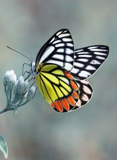 Butterfly - they look hand drawn the way their wings are patterned