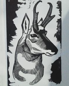 Pronghorn antelope finished! This block survived a lot, including but not limited to a preemptive inking via unsupervised child. It's a long story. But I am pleased with it nonetheless. #art #wildlife #pronghorn #pronghornantelope #antelope #animals...