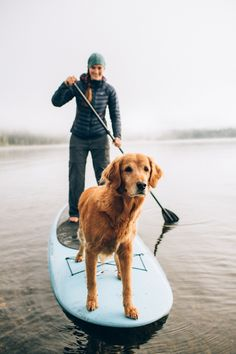 Captain of the boat!  Dog leading the way on a paddle board.  Paddle boarding with dog.