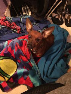 Zoey, my angel.