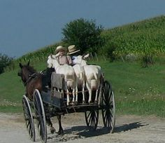 Amish hauling brush cutter/fertilizer machines