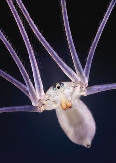 Premier insect photographer John Hallmén shares his secrets for macro bug photography Macro Photography Tips, Popular Photography, Nature Photography, Photography Settings, Photography Magazine, Micro Nano, Macro Photographers, Close Up Lens, Bugs