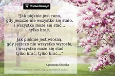 Jak pięknie jest rano... #Osiecka-Agnieszka,  #Piękno, #Z-piosenek