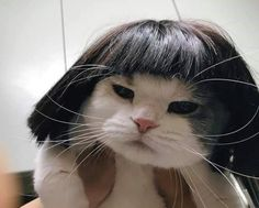 YOONJI MY DARLING, IS THAT U? Cute Funny Animals, Cute Baby Animals, Funny Cute, Funniest Animals, I Love Cats, Cool Cats, Kittens Cutest, Cats And Kittens, Gatos Cool