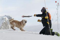 Tim et Recco, equipe cynophile de recherche des victimes d'avalanches [Ref:2310-02-1657]