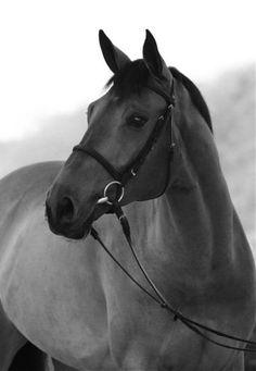 Warmblood.. I miss my horse :/
