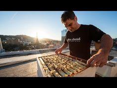 Bee Local's Sustainably Sweet Honey | Travel Oregon