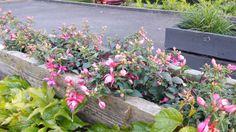 Michel's blog: Wind door de haren #stadstuin Bekijk meer blogs via www.tuinen.nl Container Gardening, Gardens, Plants, Blog, Outdoor Gardens, Blogging, Plant, Container Garden, Garden