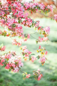Утро в яблоневом саду: стилизованная съемка undefined