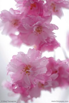 "Japanese colors 薄紅 usubeni : Japanese has many words for colors. This pink is ""usubeni"" and means ""pale rouge""."