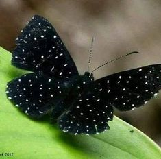 BEAUTIFUL BLACK BUTTERFLY