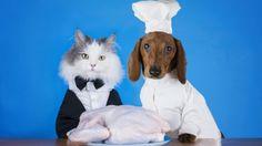 Los gatos son mucho más selectivos que los perros a la hora de comer