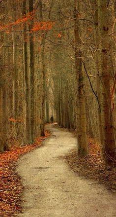 Nature and landscape photography by award-winning photographer Lars van de Goor. Beautiful World, Beautiful Places, Beautiful Pictures, Beautiful Scenery, Forest Photography, Art Photography, Winding Road, Walk In The Woods, Pathways