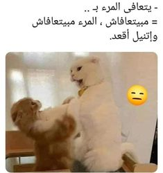 Arabic Memes, Funny Arabic Quotes, Funny Love Jokes, Bear Wallpaper, Funny Comments, Words, Studying, Animals, Mercedes Benz