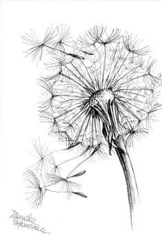 rysunek cienkopisem rosliny - Szukaj w Google