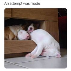 Hilarious Animal Memes That Will Absolutely Make You Smile - 23