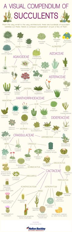 Indoor Gardening succulents identification chart.