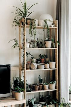Indoor plant shelves - Best 8 Easy DIY Plants Shelf Ideas For Wall Decoration Your Home Interior – Indoor plant shelves Tall Plant Stand Indoor, Tall Plant Stands, Diy Plant Stand, Window Shelf For Plants, Indoor Plant Shelves, Window Shelves, Shelves For Plants, Ladder Shelves, Window Sill
