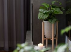 Small pot planter with timber legs Eva series by PurpleJungleCo