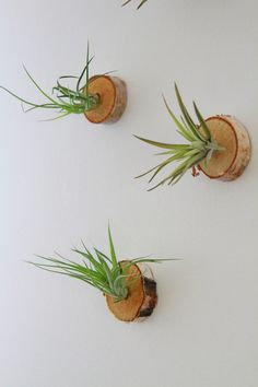 Living Art Wall Mounts with Plants / Place by GemsOfTheSoil, $40.00  wow dont have to pay $40, good idea to DIY