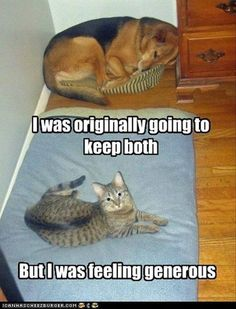 Cat who cares enough to share... Haha