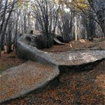 A Beached Whale in the Forests of Argentina