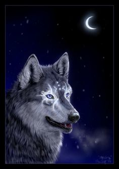 Wolf Couple 2 - Dreamcatcher Photo by jcPanders Anime Wolf, Cute Creatures, Fantasy Creatures, Off White Comic, Native American Wolf, American Indians, Wolf Husky, Wolf Artwork, Fantasy Wolf