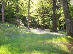 wild forest garden
