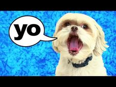 THIS DOG CAN TALK!!