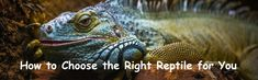 How to Choose the Right Reptile for You #pets #reptile Choose The Right, Pet Care, Reptiles, Pets, Animals, Animales, Animaux, Animal, Animais