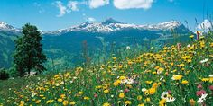 Camping Hobby 3, Unterseen/Interlaken - Muchas excursiones son de facil acceso por Telecabina o Teleferico.
