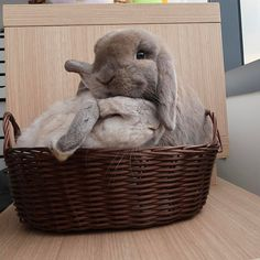 """4,646 mentions J'aime, 36 commentaires - Plyor (@chub_bun) sur Instagram : """"This basket is not very roomy!"""""""