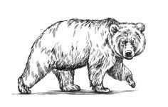 Grizzly Bear, Hand Drawn Sketch Of Bear Walking, Dangerous