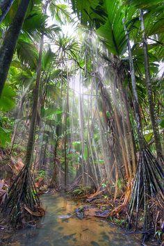 e de Mai Nature Reserve, Praslin Island, Seychelles ~ UNESCO World Heritage Site ~ natural palm forest preserved in its original state Les Seychelles, Seychelles Islands, Seychelles Vacation, Praslin Seychelles, Fiji Islands, Cook Islands, Beautiful Islands, Beautiful World, Forest Preserve