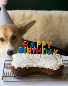 Homemade Dog Birthday Cake (carrot cake with cream cheese frosting) Animal Birthday, Dog Birthday, Happy Birthday, Birthday Cakes, 15th Birthday, Birthday Parties, Homemade Dog Treats, Pet Treats, Dog Treat Recipes