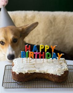 Homemade Dog Birthday Cake / www.acozykitchen.com by adriannaadarme, via Flickr