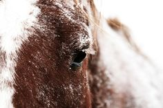 Penn Vet's New Bolton Center offers some reminders on keeping your horse healthy during a cold snap.