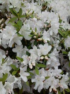 So many blossoms!