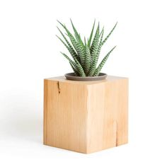 This beautiful planter is made out of reclaimed pine heartwood. Plant a succulent, cactus or favorite plant in this natural wood pot. #reclaimed #cactus #succulent #cactuspot #succulentpot #planter #succulentplanter #cactusplanter #reclaimedpot #heartwood #pinewood #homedecor #giftideas #woodplanter #giftforhim #giftfordad