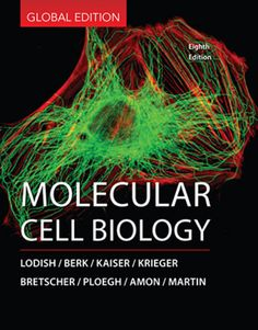 """Molecular cell biology : 8th ed."" / Harvey Lodish ... [et al.] New York, NY : Freeman, cop. 2016. Matèries : Citologia; Biologia molecular. #nabibbell"