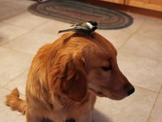 Maddie isn't too sure about the bird being on her head. It's little toenails were digging into her skin to hang on.