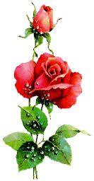 Výsledok vyhľadávania obrázkov pre dopyt basnicky k meninam podla mena I Wallpaper, Flower Images, Animated Gif, Clip Art, Animation, Awesome, Flowers, Plants, Garden