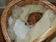 Please remember pinners that cute, little pups will want to be with you the rest of their lives.
