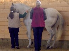 Futsal for horses, by Alexandra Kurland. From mat work to piaffe using clicker training Positive Reinforcement, Horse Training, Zoo Animals, Articles, Horses, Cats, Videos, Animales, Gatos