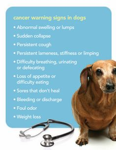 10 Cancer Warning Signs in Dogs. Please share!