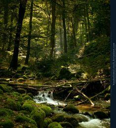 Forest River Premade by kuschelirmel-stock.deviantart.com
